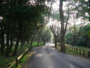 九州一周中!! 4月3日 後半戦スタート!風がもの凄いです! 福岡〜虹ノ松原〜唐津