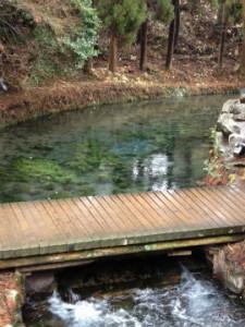 阿蘇から湧き出るザ・透明!! 熊本 白川水源。