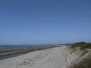ゴールデンウィークに最適!トトロの森が広がってます。 鹿児島県 吹上浜