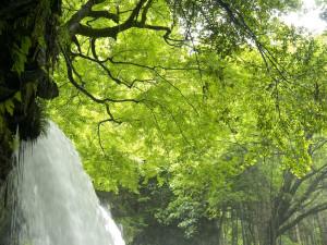 滝の裏側に回り込める、絶景スポット!in黒川温泉付近